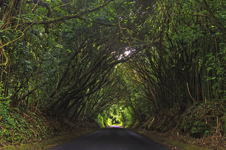 Pali State Park road, Oahu, Hawaii